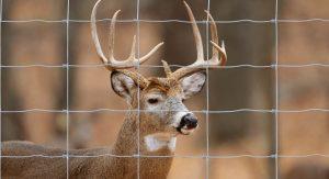 Anti Deer Fence
