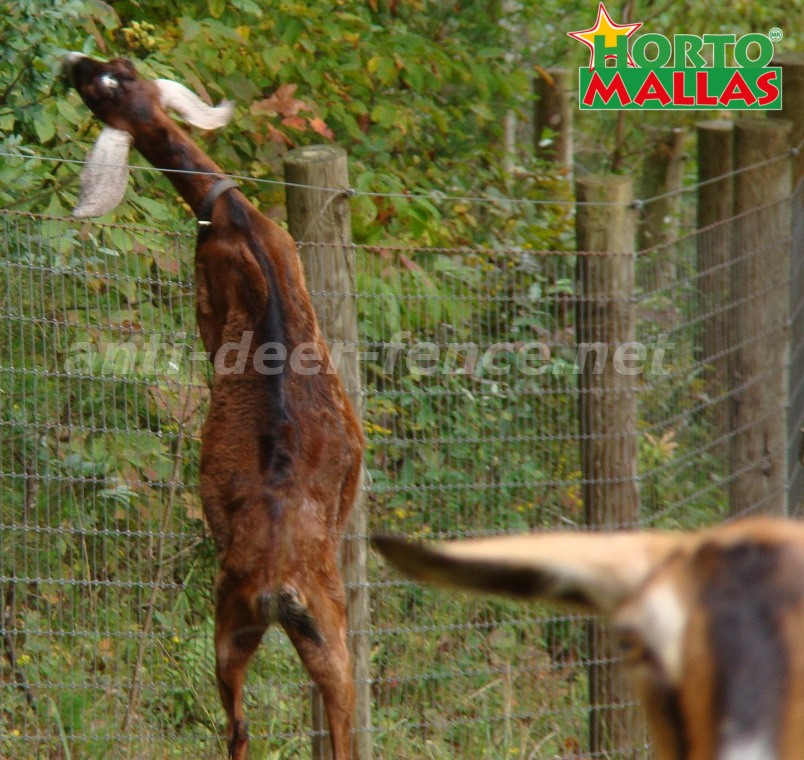 Anti deer fence effective protection of plants and crops against wild animals
